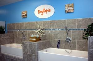 Dogtopia Interior Photo